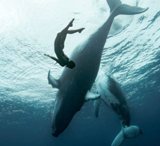 Image for International Ocean Film Tour