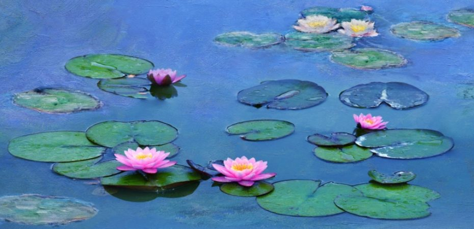 Water Lilies Of Monet  The Magic Of Water And Light Resized Image 2